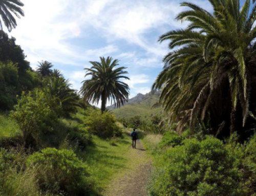 El Cabildo de Tenerife invertirá dos millones de euros en mejoras y conservación del Parque Rural de Anaga
