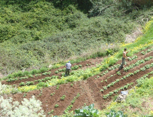 El Cabildo organiza una jornada sobre titularidad compartida de las explotaciones agrarias