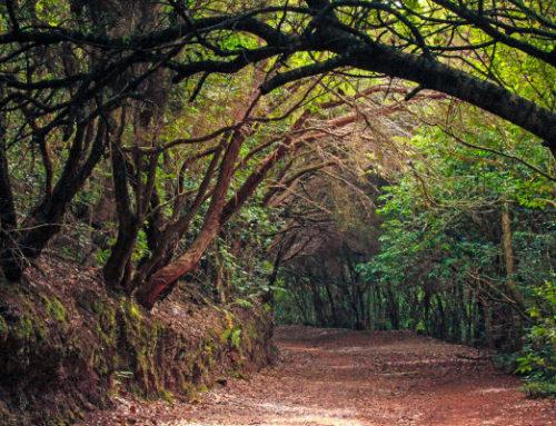 Santa Cruz es la tercera gran ciudad de España con más suelo natural gracias a Anaga