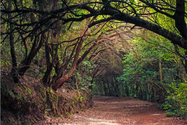 El Cabildo de Tenerife promueve la participación ciudadana en la elaboración del Plan Insular de Biodiversidad