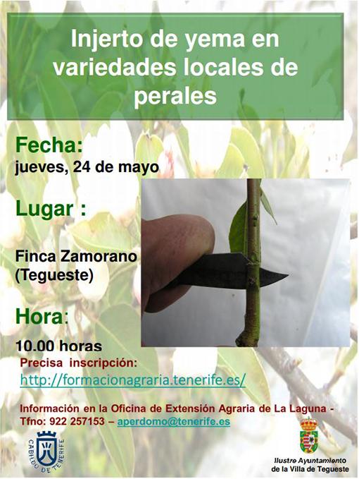 Tegueste acoge una charla sobre injerto de yema en variedades locales de perales
