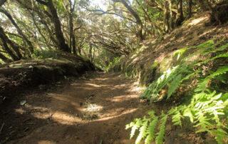 Tegueste abre el plazo de inscripción para la Ruta El Monte Encantado