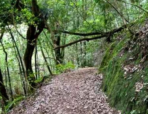 Abierto el plazo de inscripción para la ruta «De Cruz del Carmen a Pedro Álvarez»