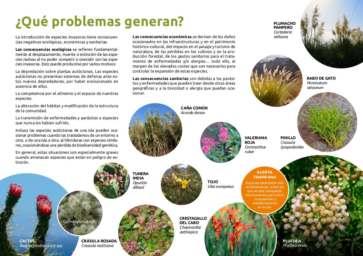 Especies Exóticas Invasoras - Flora