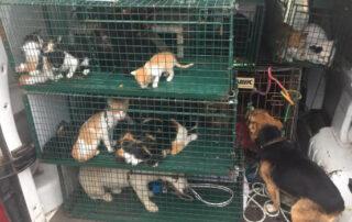 Requisan 22 gatos y 12 perros sin identificación en Las Carboneras