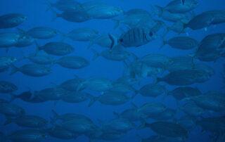 El Cabildo impulsa la declaración de las Reservas Marinas de Interés Pesquero de Anaga y Teno