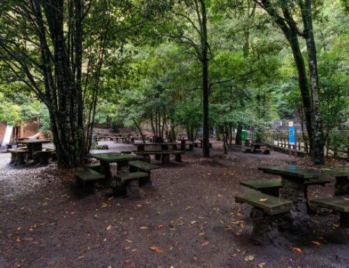 El Cabildo reabrirá este sábado las áreas recreativas y de acampada