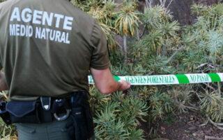 Alertan de envenenamientos en Igueste de San Andrés