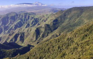 El Monte Aguirre: vergel de Anaga, manantial de Santa Cruz