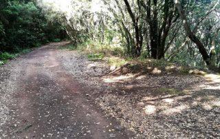 El Cabildo destina más de un millón de euros a la recuperación de senderos en Anaga