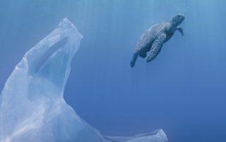 No tires residuos al mar. En el fondo lo único que sobrevive es tu basura