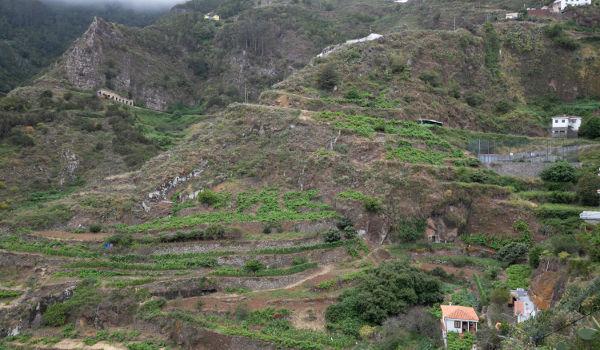 El Cabildo realizará un análisis del sector primario de Anaga