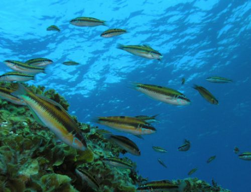 El Cabildo reitera la necesidad de impulsar las Reservas Marinas de Anaga y Teno