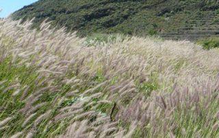El Ayuntamiento de Tegueste impulsa un programa de senderos para voluntariado ambiental
