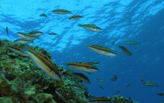 El Cabildo pone en valor el respaldo del Gobierno central a las reservas marinas de Teno y Anaga