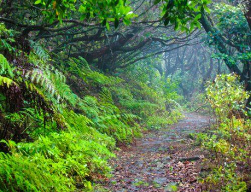 El Cabildo presenta tres planes de sostenibilidad turística por más de 9,5 millones de euros