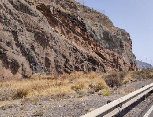 El Cabildo mejora el paisaje de la carretera de San Andrés y rescata sus dragos